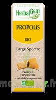 Herbalgem Propolis Large Spectre Solution Buvable Bio Fl Cpte-gttes/15ml à BOUILLARGUES
